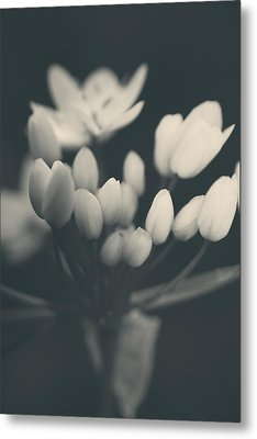 It's A New Life Metal Print by Laurie Search
