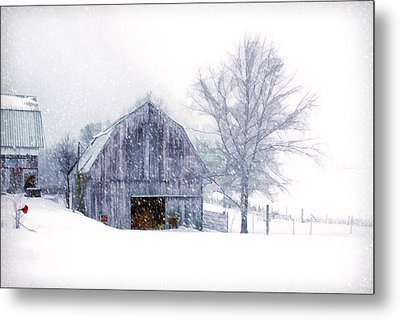 It's Cold Outside Metal Print by Mary Timman