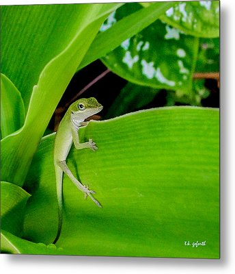 It's Easy Being Green Squared Metal Print by TK Goforth