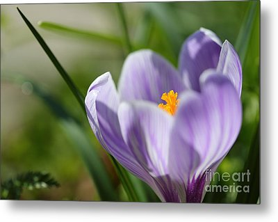 It's Finally Spring Metal Print by LHJB Photography