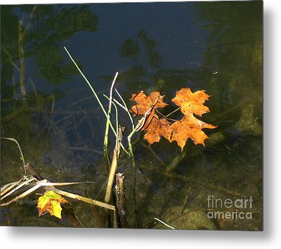 It's Over - Leafs On Pond Metal Print by Brenda Brown