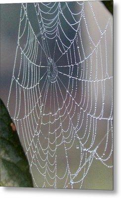 Ittsy Bittsy Spider Metal Print by John Glass