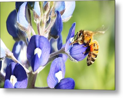 I've Got A Bee In My Bluebonnet Metal Print by Lorri Crossno