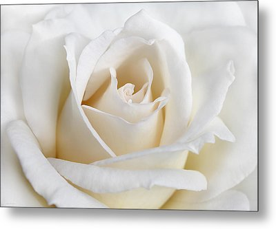 Ivory Rose Flower Metal Print by Jennie Marie Schell