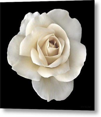 Ivory Rose Flower Portrait Metal Print by Jennie Marie Schell