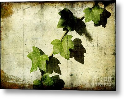 Ivy Metal Print by Ellen Cotton
