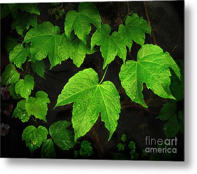 Metal Print featuring the photograph Ivy by Tom Brickhouse