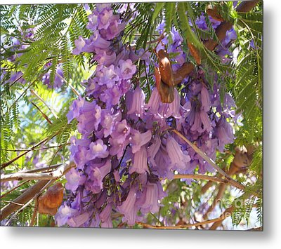 Jacaranda Blossoms 2 Metal Print by Nancy Kane Chapman