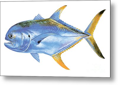 Jack Crevalle Metal Print by Carey Chen