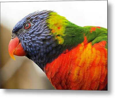 Jack Of All Colors Metal Print