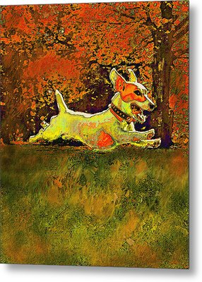 Jack Russell In Autumn Metal Print by Jane Schnetlage