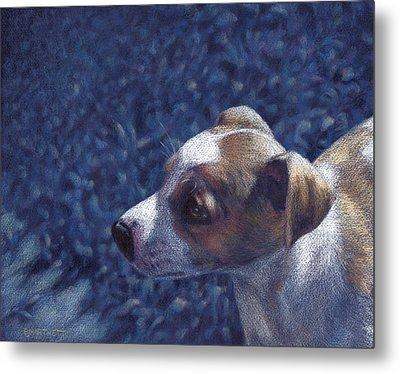 Jack Russell Terrier On Blue Metal Print