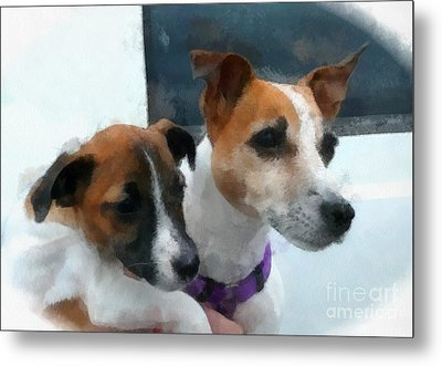 Jack Russells Metal Print by Betsy Cotton