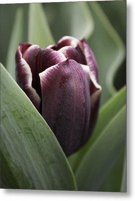 Jackpot Tulip Metal Print