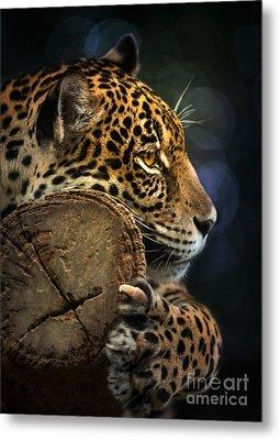 Jaguar  Metal Print by Anek Suwannaphoom