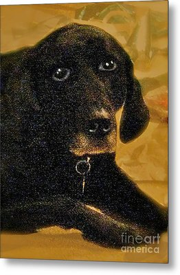 Jaime A Black Lab Metal Print