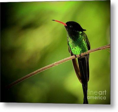Jamaican Hummingbird 2 Metal Print