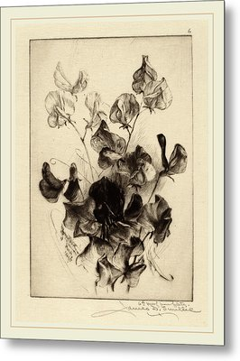 James David Smillie, Sweet Peas, American Metal Print by Litz Collection