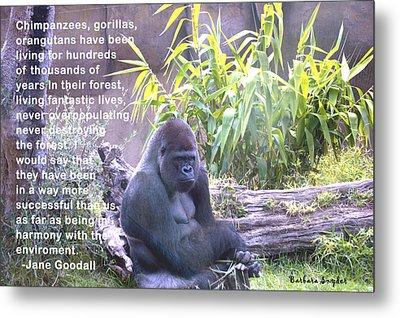 Jane Goodall Gorilla Metal Print by Barbara Snyder