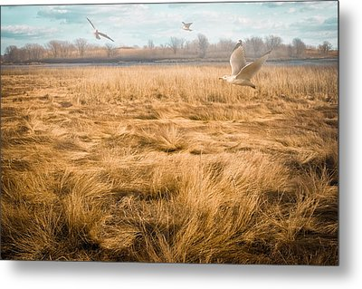 January Afternoon Metal Print by Gary Heller