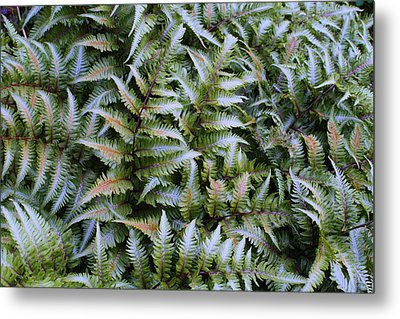 Metal Print featuring the photograph Japanese Ferns by Kathryn Meyer