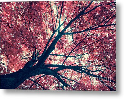 Japanese Maple - Vintage Metal Print by Hannes Cmarits
