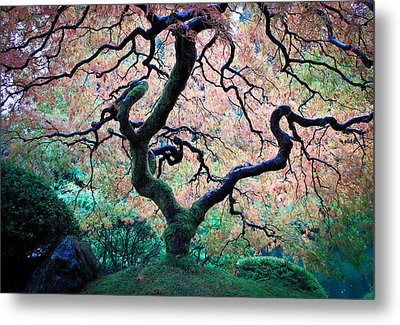 Japanese Maple In Autumn Metal Print by Athena Mckinzie