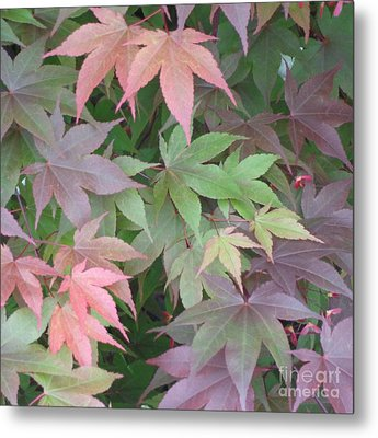 Japanese Maple Leaves Metal Print by Christina Verdgeline