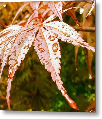 Japanese Maple Leaves Metal Print by Marianna Mills