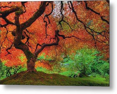 Japanese Maple Tree In Autumn Metal Print