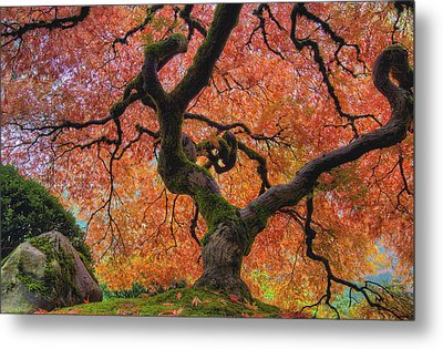 Japanese Maple Tree In Fall Metal Print