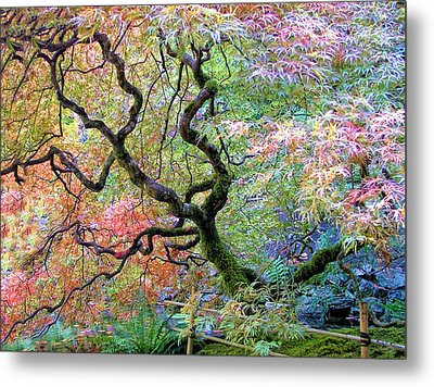 Japanese Maple Metal Print by Wendy McKennon