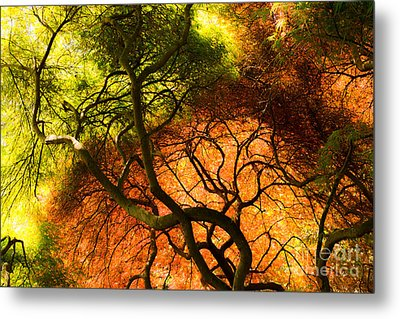 Japanese Maples Metal Print