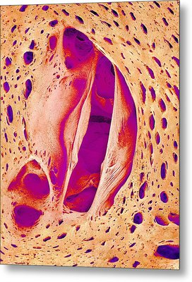 Japanese Pilchard Heart Valve, Sem Metal Print by Science Photo Library