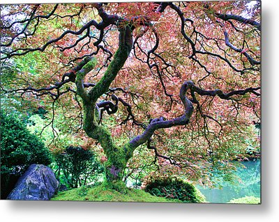 Japanese Tree In Garden Metal Print
