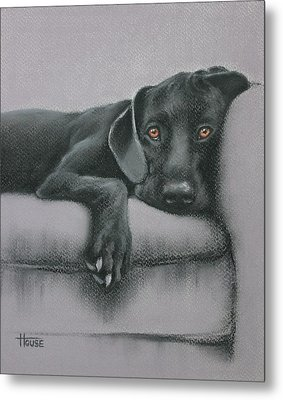 Metal Print featuring the drawing Jasper by Cynthia House