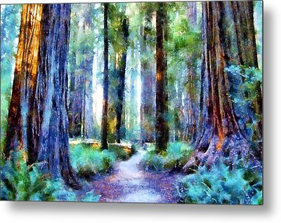 Jedediah Smith Grove Metal Print by Kaylee Mason