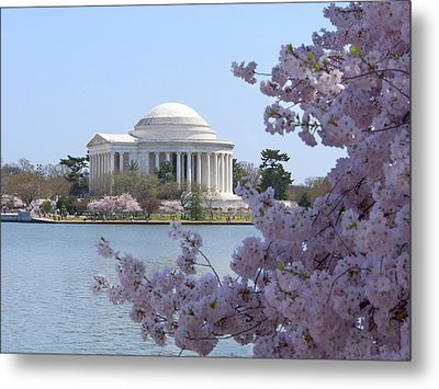 Jefferson Memorial - Cherry Blossoms Metal Print by Mike McGlothlen