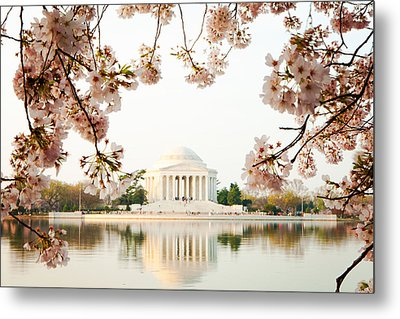 Jefferson Memorial With Reflection And Cherry Blossoms Metal Print by Susan Schmitz