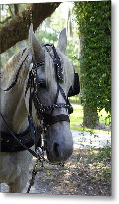 Jekyll Horse Metal Print by Laurie Perry