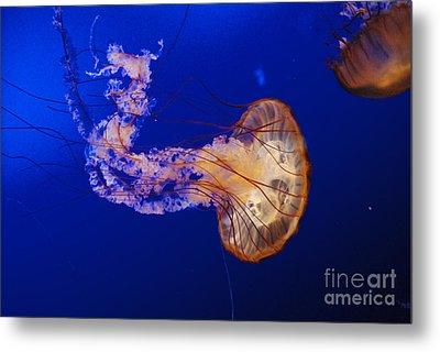 Jelly Fish 1 Metal Print by Mark McReynolds