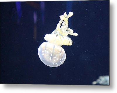 Jellyfish - National Aquarium In Baltimore Md - 121210 Metal Print