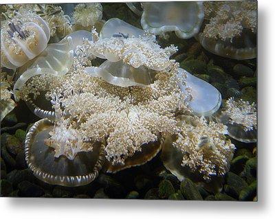 Jellyfish - National Aquarium In Baltimore Md - 121215 Metal Print by DC Photographer