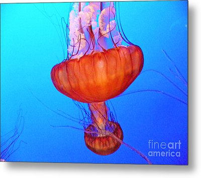 Jellyfish Viii Metal Print
