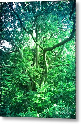 Metal Print featuring the photograph Jersey Tree by Denise Tomasura