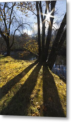 Jewel In The Trees Metal Print by Debra and Dave Vanderlaan