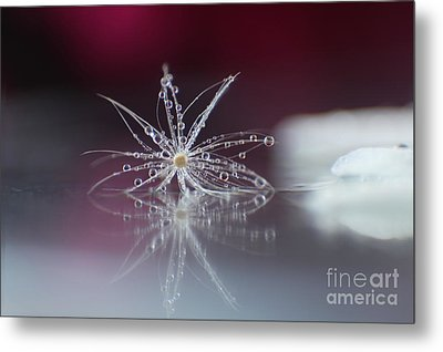Jewels Metal Print by Eden Baed
