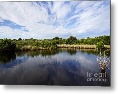 Joe Fox Fine Art - Flooded Grasslands And Mangrove Forest In The Metal Print