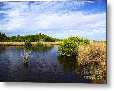 Joe Fox Fine Art - Flooded Grasslands With Mangrove Forest In The Background In The Florida Everglades Usa Metal Print
