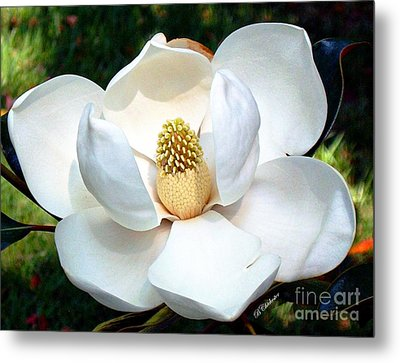 Metal Print featuring the photograph John's Magnolia by Barbara Chichester